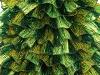Samba Glitz Green Shades